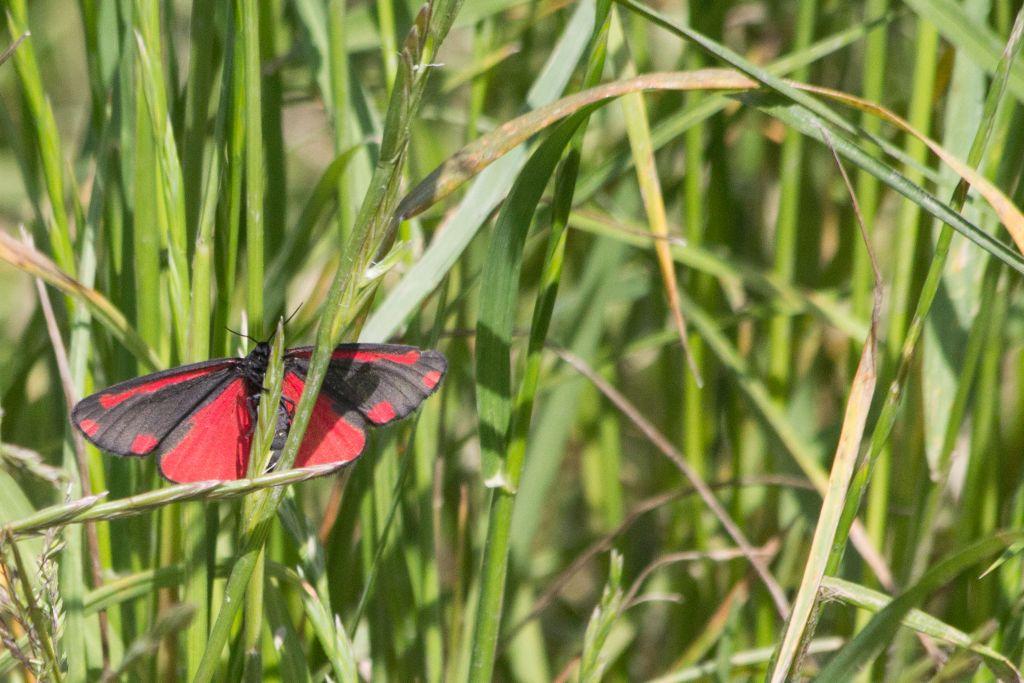 vlinder-oranjezon.jpg
